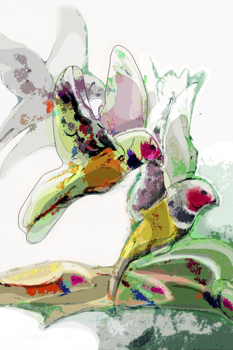 art print gouldian finch 2
